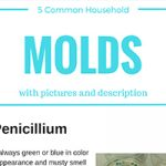 title slide for 5 common household mold blog