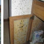 How to Identify 5 Common Types of Mold in Your Household