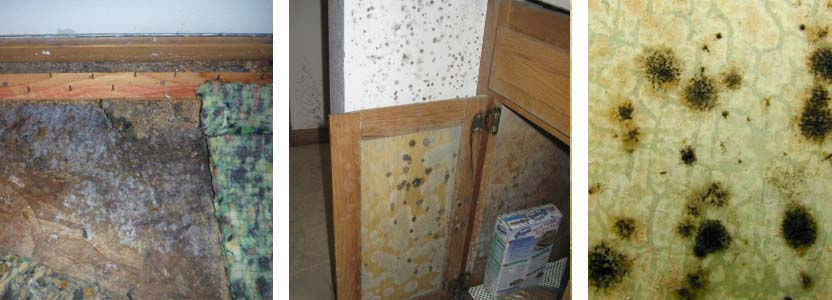 different types of mold in home