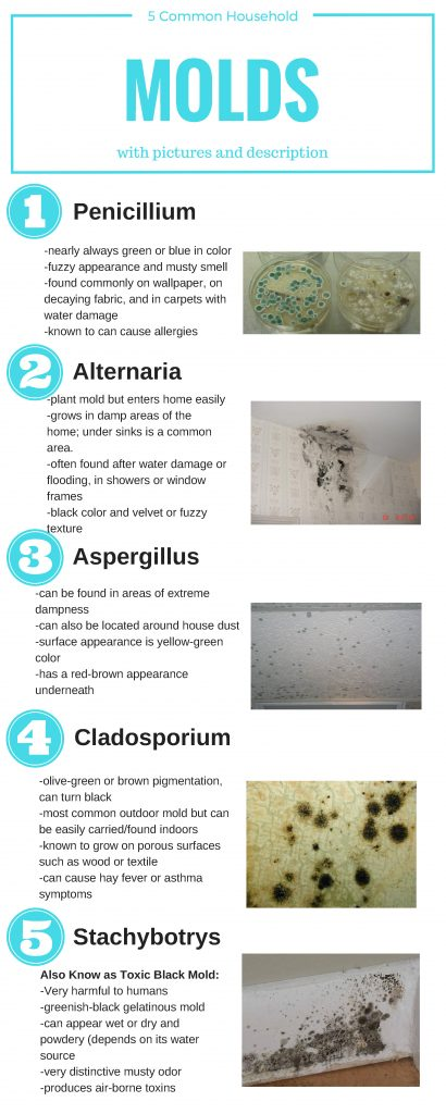 5 Common Household Mold Infographic For Blog