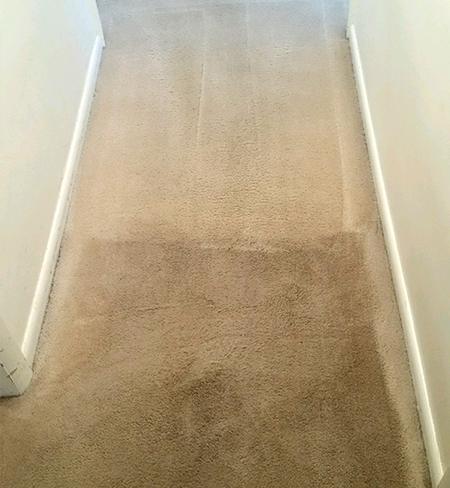 in action before and after shot of beige carpet cleaning