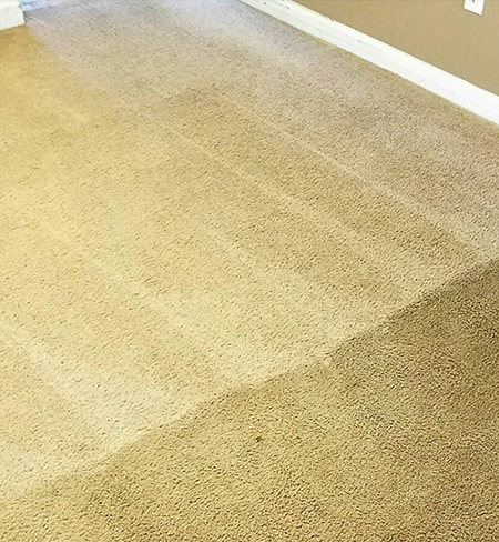 in action before and after picture of light carpet cleaning