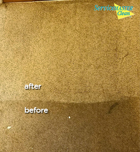 before and after picture of dirty brown carpet