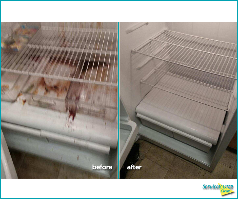refrigerator cleaning before and after