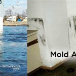 Will Mold be an Issue in Your Home After the Flood Cleanup?