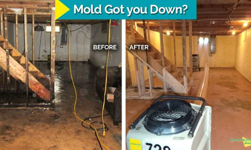 mold in basement before and after
