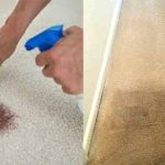 DIY vs. Professional Carpet Cleaning – 4 Things You Need to Know