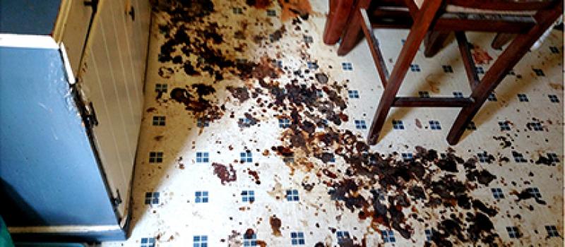spill on kitchen linoleum floor